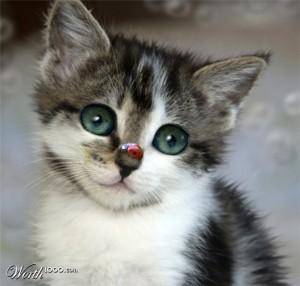 kitten, pretty kitty