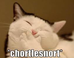 cat laughing, ka-snort, chortlesnort, funny