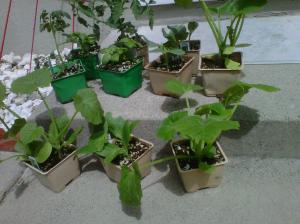 There's 3-4 plants in each of those containers!