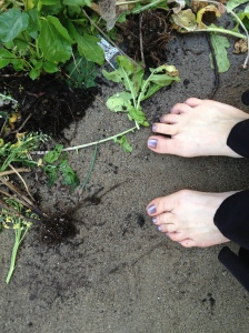 Yes, I garden barefoot (unless there's bugs involved).